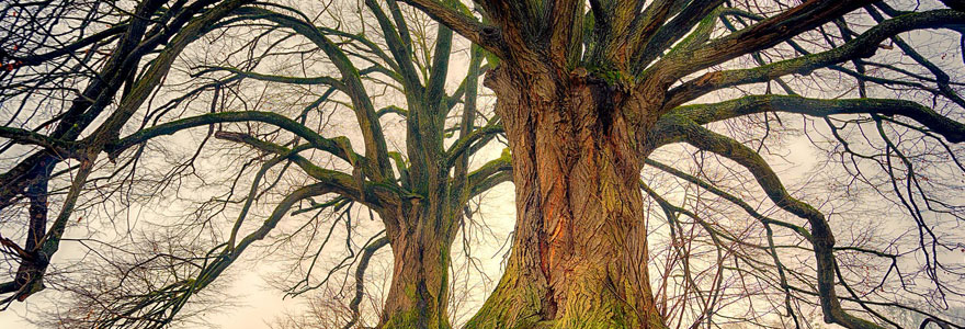 bois et branches déco