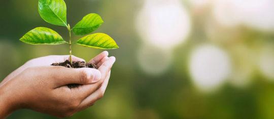 formations spécialisées dans l'environnement